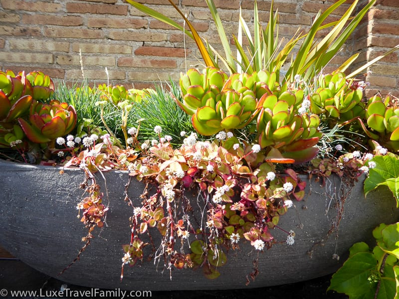 plants in a pot on the rooftop deck at the Mercer Barcelona