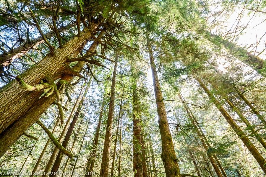 A rainforest trail to Sandcut Beach, B.C.