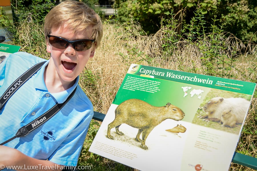 Things to do in Vienna with Kids Schonbrunn Zoo