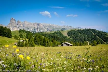 Summer-Dolomites-wildflowers