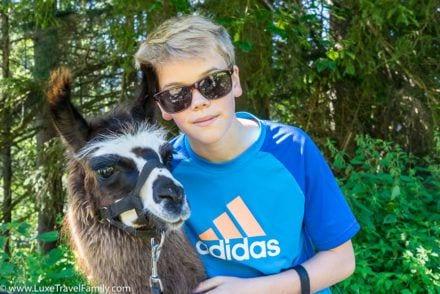 cuddly creature family llama trekking in austria